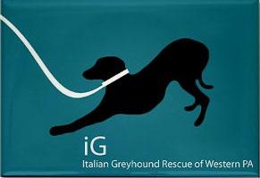 Italian Greyhound Rescue Of Pennsylvania